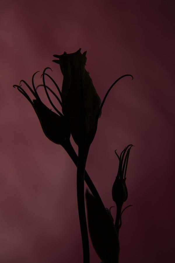 One flower on a dark background Stock Photo 10