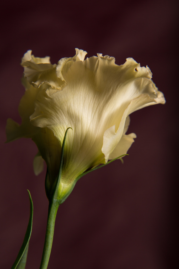 One flower on a dark background Stock Photo 11