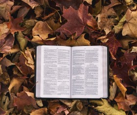 Open book placed on dead leaves Stock Photo