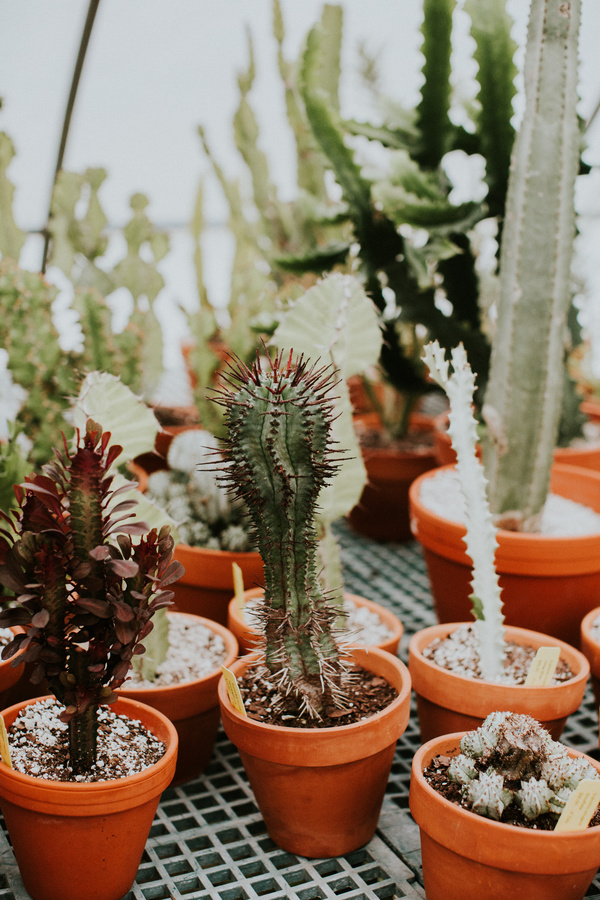 Potted prickly cactus Stock Photo