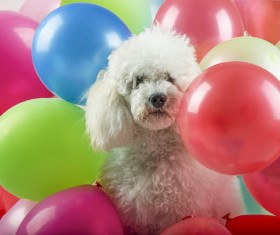 Puppy in balloon Stock Photo