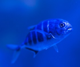 Tiny wild fish swimming in water Stock Photo