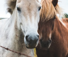 Two horses on farm Stock Photo