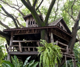 Unique tree house Stock Photo 02