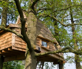 Unique tree house Stock Photo 03