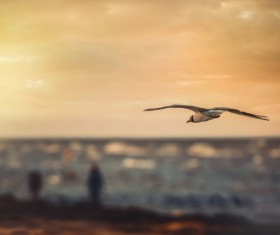 bird flying at sunrise Stock Photo