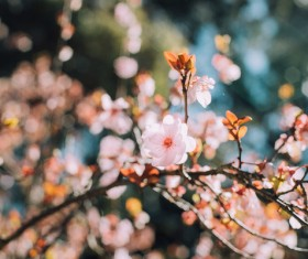 blooming flowers in spring Stock Photo