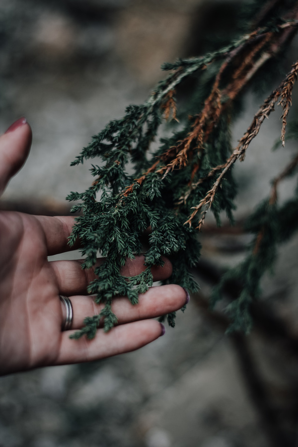 hand touching natural leaves Stock Photo