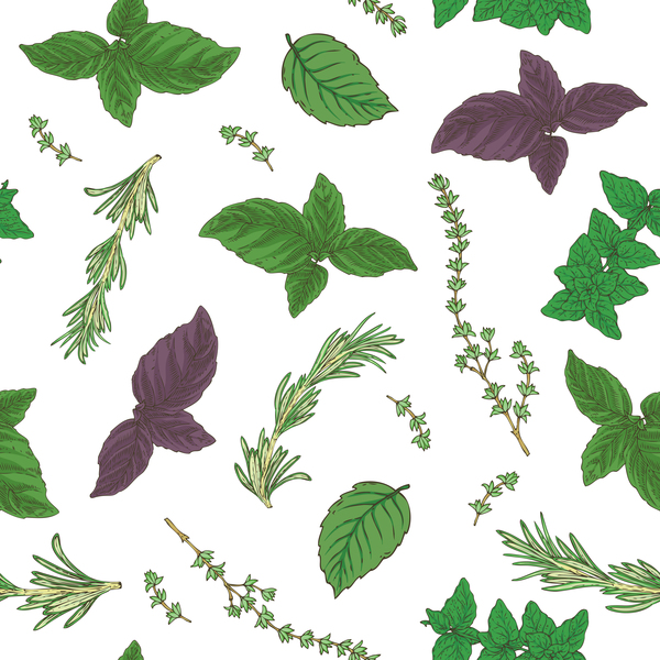 herbs seamless vector pattern