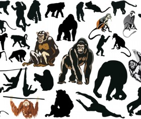 monkey coll big vector