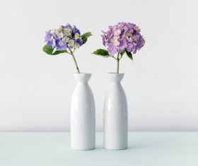 violet flowers in white pots Stock Photo