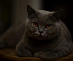 A wonderful English cat Stock Photo (1)