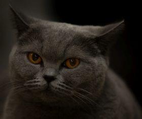 A wonderful English cat Stock Photo (2)