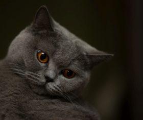 A wonderful English cat Stock Photo (3)