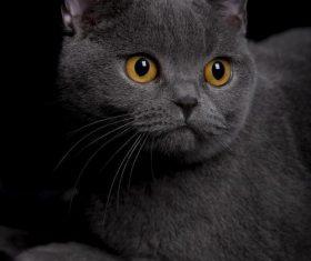 A wonderful English cat Stock Photo (4)