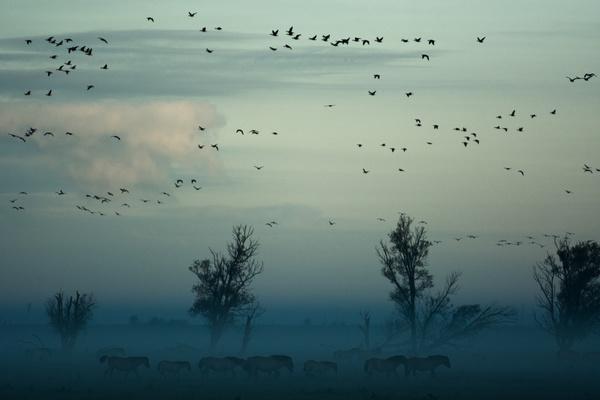Africa wildlife landscape at dusk Stock Photo