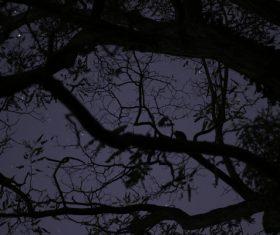 Big tree in darkness of night Stock Photo