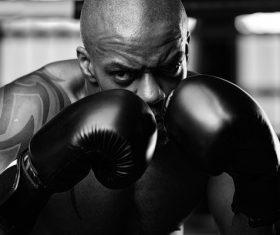 Boxer training Stock Photo 01
