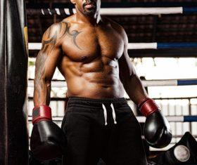 Boxer training Stock Photo 02