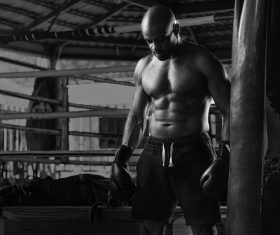 Boxer training Stock Photo 04