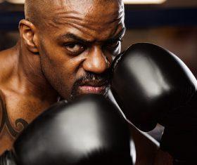 Boxer training Stock Photo 06