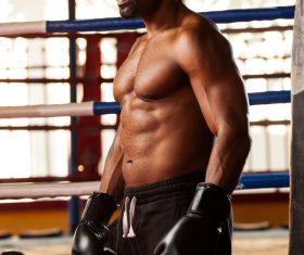 Boxer training Stock Photo 07
