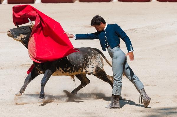 Brave Matador Stock Photo 01