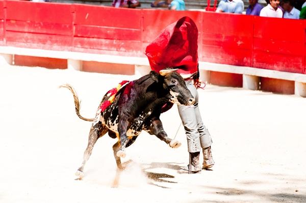 Brave Matador Stock Photo 02