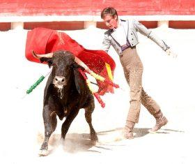 Brave Matador Stock Photo 03