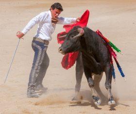 Brave Matador Stock Photo 04
