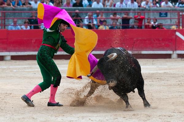 Brave Matador Stock Photo 05