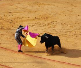 Brave Matador Stock Photo 07