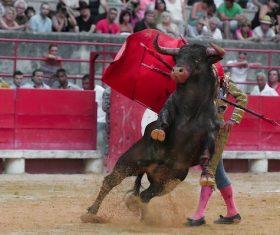 Brave Matador Stock Photo 08