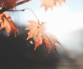 Closeup natural leaves on tree under sunrise Stock Photo