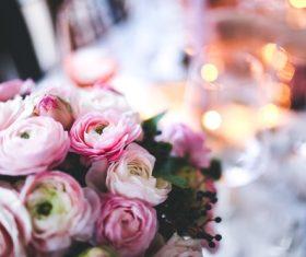 Closeup of Beautiful Pink Flowers Stock Photo
