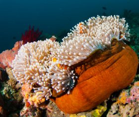 Colorful underwater reef Stock Photo 03