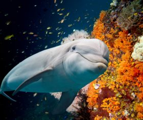 Colorful underwater reef and dolphins Stock Photo
