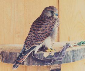 Domesticated bird Stock Photo 01