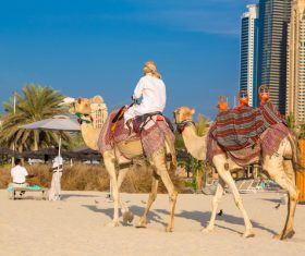Dubai Beach ride camel experience Stock Photo 01
