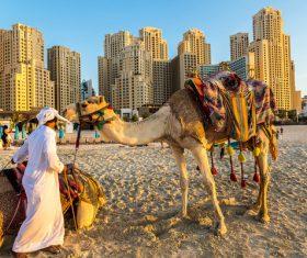 Dubai Beach ride camel experience Stock Photo 02