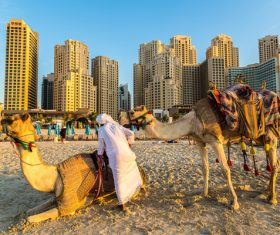 Dubai Beach ride camel experience Stock Photo 04