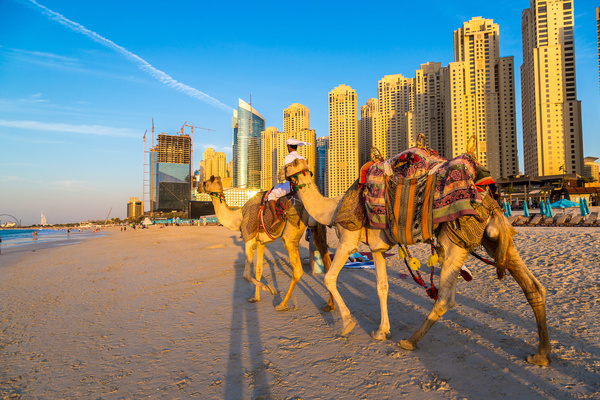 Dubai Beach ride camel experience Stock Photo 06