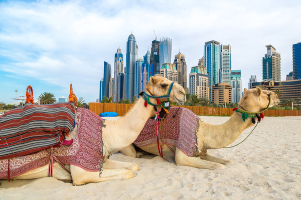 Dubai Beach ride camel experience Stock Photo 09