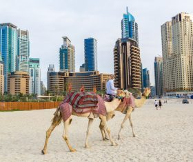 Dubai Beach ride camel experience Stock Photo 10