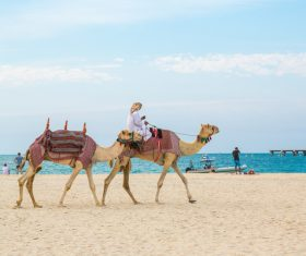Dubai Beach ride camel experience Stock Photo 13