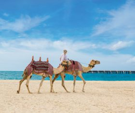 Dubai Beach ride camel experience Stock Photo 14