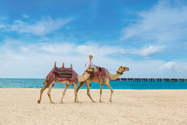 Dubai Beach ride camel experience Stock Photo 14