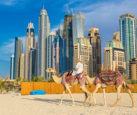 Dubai Beach ride camel experience Stock Photo 15