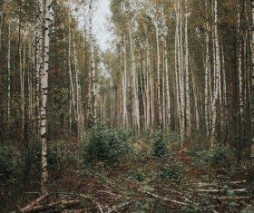 Empty forest scenery Stock Photo