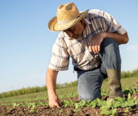Farmers examine seedlings Stock Photo
